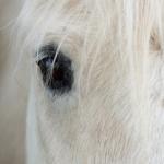 Pferde fotografieren: 10 Tipps für wunderschöne Pferde-Bilder