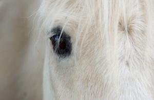 Pferde Augen Nahaufnahme