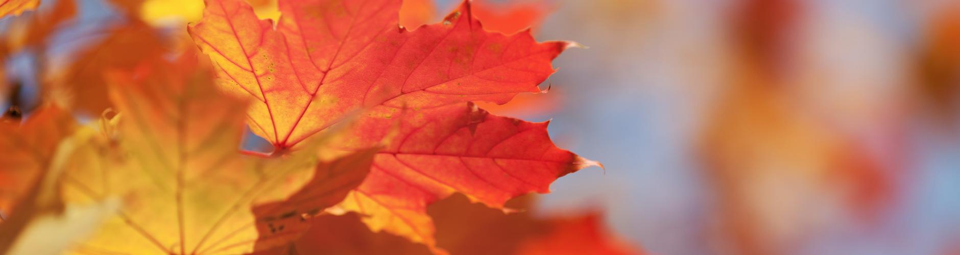 Blätter in den Vordergrund