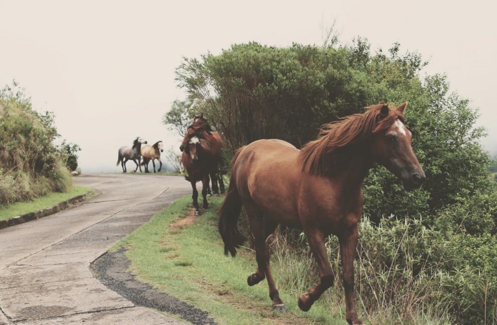 pferde-fotografieren